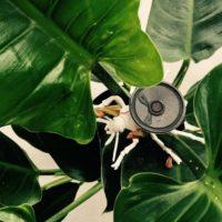 Tuin als Kunstlab