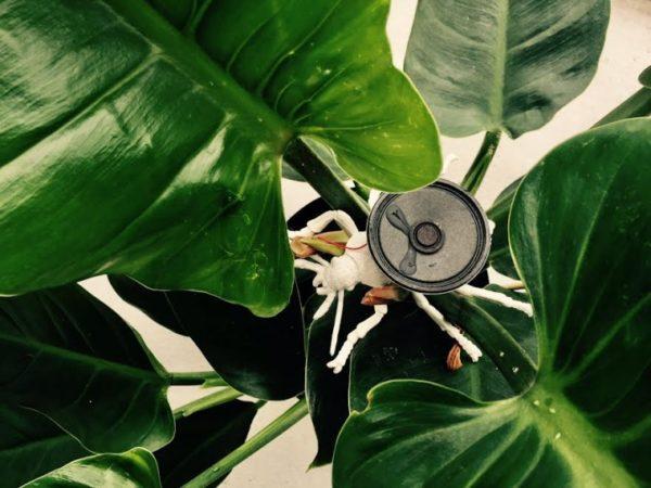 Veerle Pennock liet zich inspireren door onderzoek waaruit blijkt dat planten grotere bladen - en dus betere oogsten - vormen onder invloed van klassieke muziek