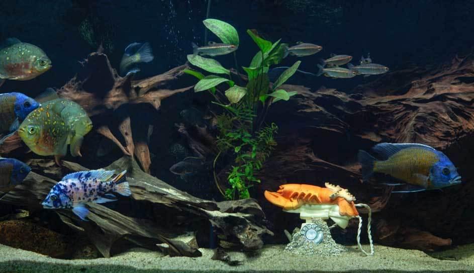 Aquariumbeeldje door van Beek | Foto: Peter Vandermeer