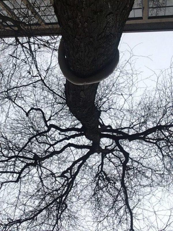 oude boom binnenplaats KABK