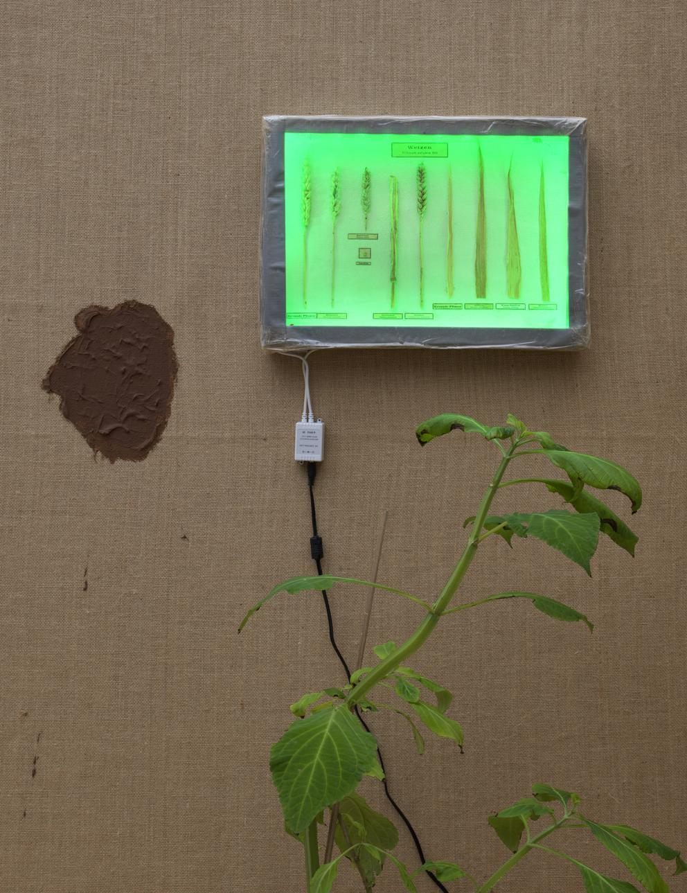 exhibition '℞eformat', PhD research project by Ruchama Noorda